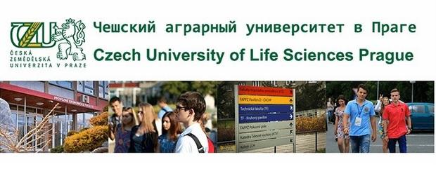 Подготовительная программа к университету, CZU